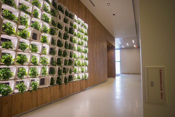 To soften life in the high-anxiety center, the designers experimented with phytoremediation, the use of plants to help purify the interior environment. Credit Ángel Franco/The New York Times