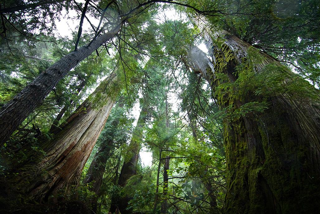 Great Bear Rainforest. Photo: Andrew Wright.