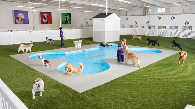 Rendering of the Paradise 4 Paws doggie play area at the upcoming ARK animal terminal in the JFK International Airport in New York. Image: Paws 4 Pets, via huffingtonpost.com