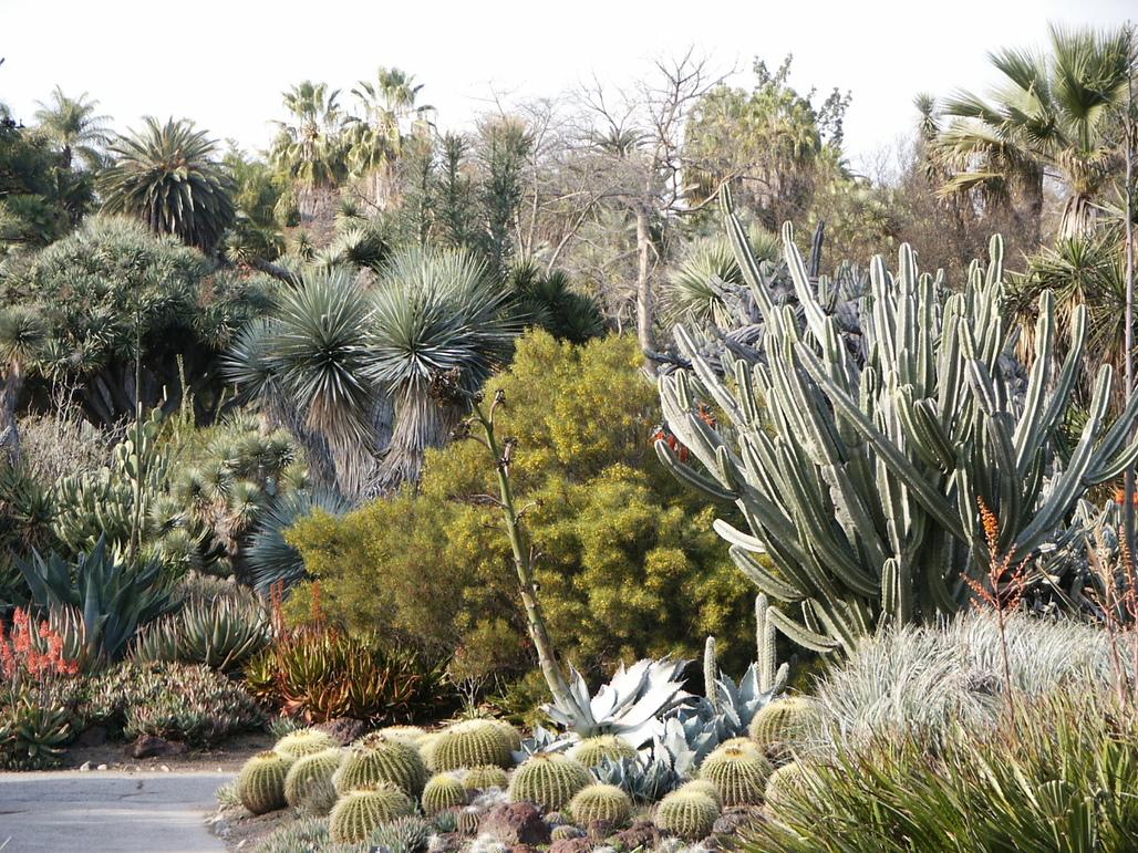 A cactus garden. Image via wikimedia.org