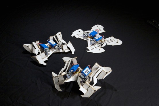 The self-folding crawling robot in three stages. Photo: Seth Kroll/Wyss Institute. Image via online.wsj.com