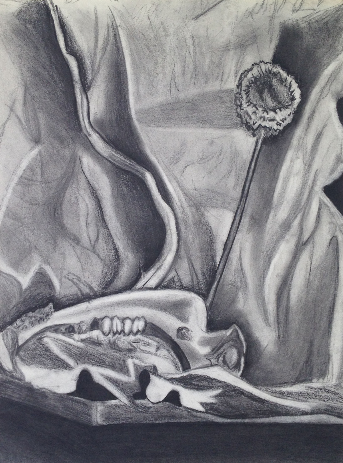 Still Life, Charcoal