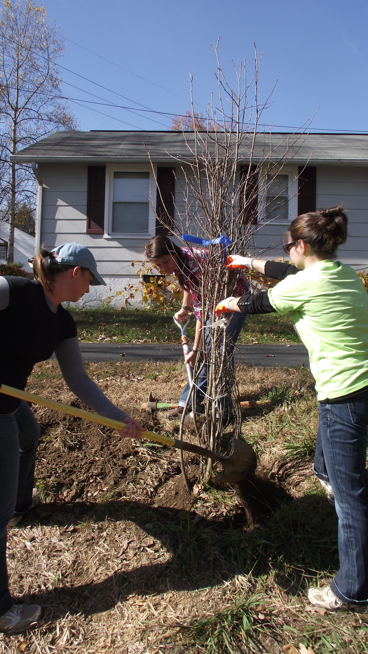 Volunteers planting a Serviceberry tree
