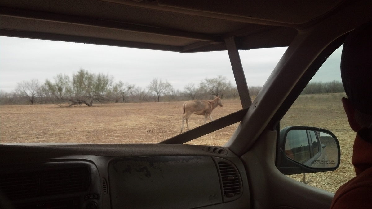 And now were in Africa; were on fucking safari... Gazelles watch us with full, orphan eyes. Here they are, the descendants of vaudeville circus and roadside petting zoos, marooned a world away in West Texas. from Field Transmissions from W. Texas, published in MANIFEST 1 Credit: GRNASFCK