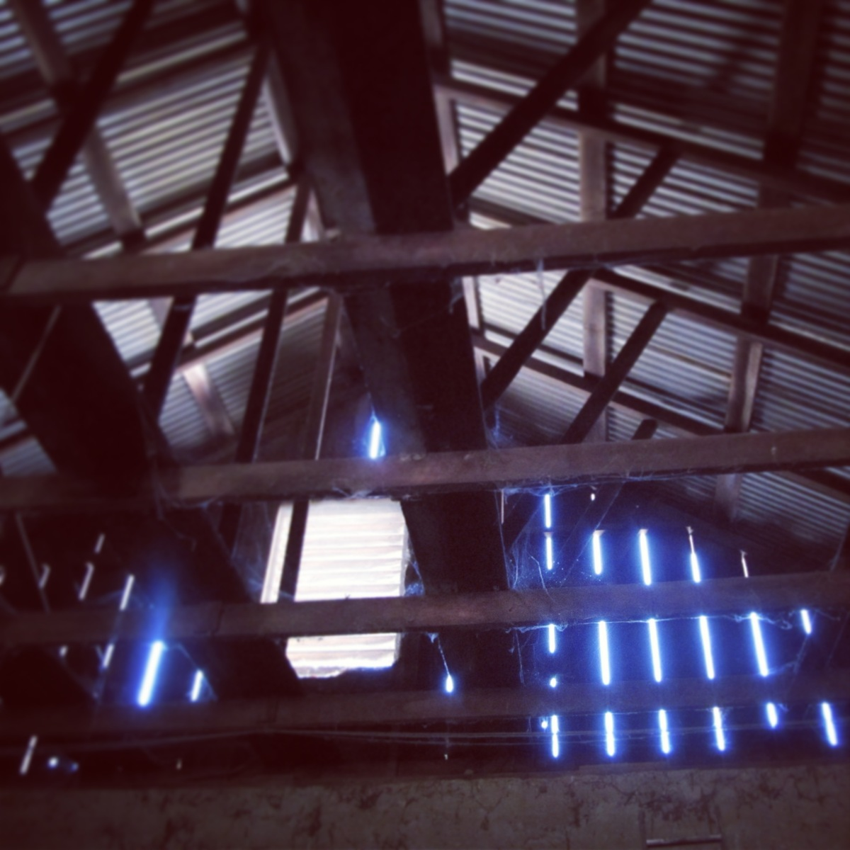 barn: roof structure