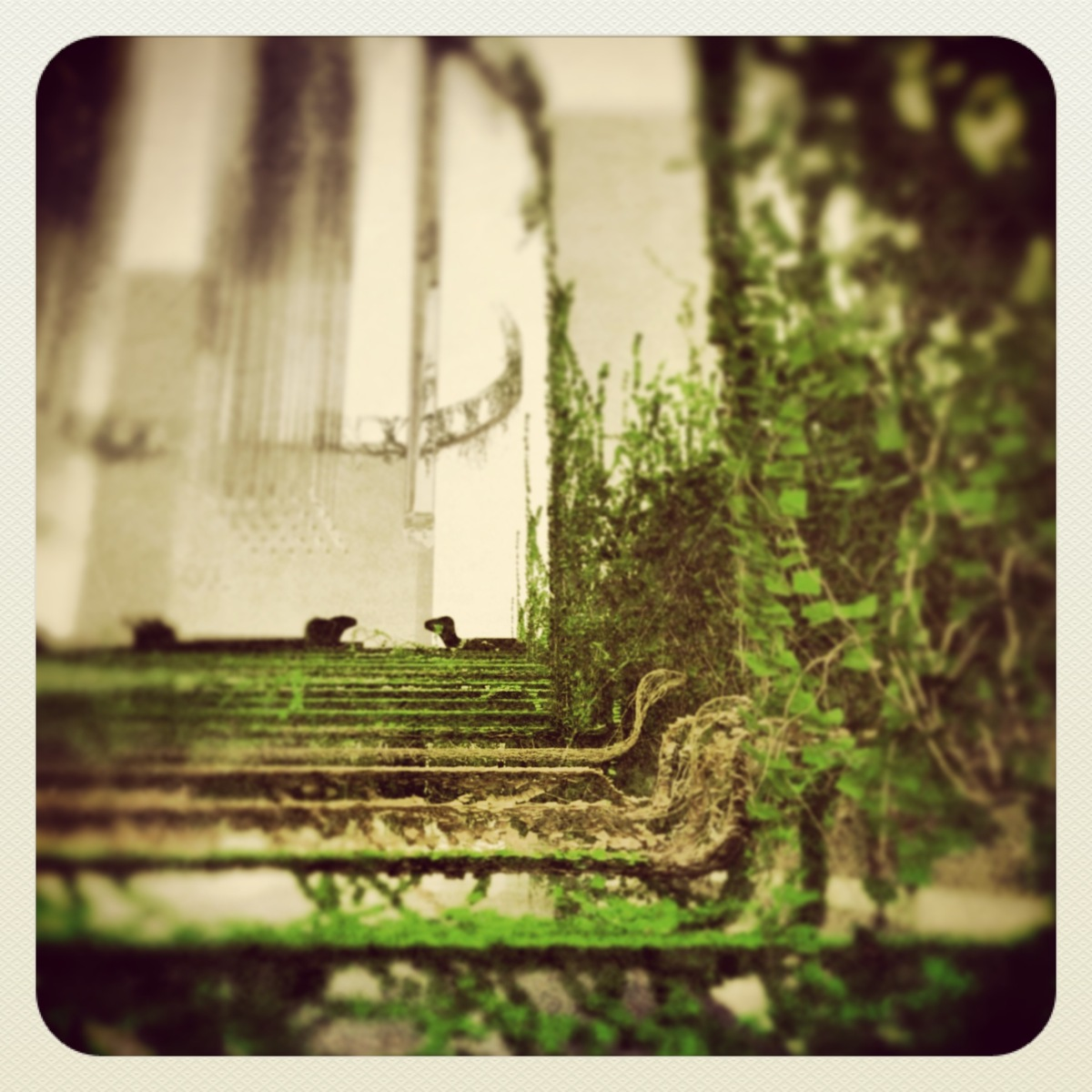 The ivy staircase of the topiary garden evokes memories that she would rather had lain dormant.