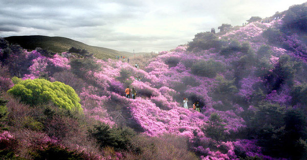Azalea on sunny slope hill © West 8 urban design & landscape architecture