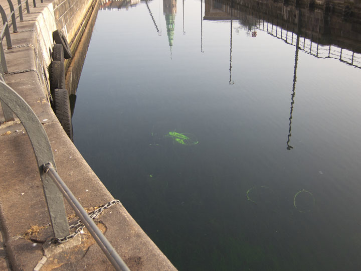 Grave of a bike in Copenhagen's many canals