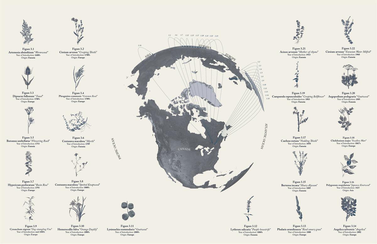 Selection of Invasive Plant Species