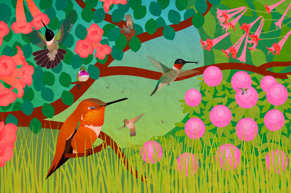 "Life of Hummingbirds. (2011) One of seven bird illustrations for the educational phone app ""Build a Bird"" by Iridescent and the Cornell Lab of Ornithology. It has also been featured on TV in commercials + shows and several exhibits."
