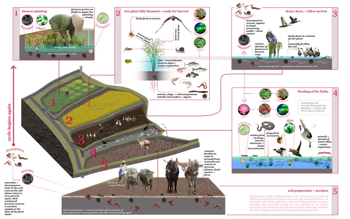 Subak ecology web, image via Julia Watson.