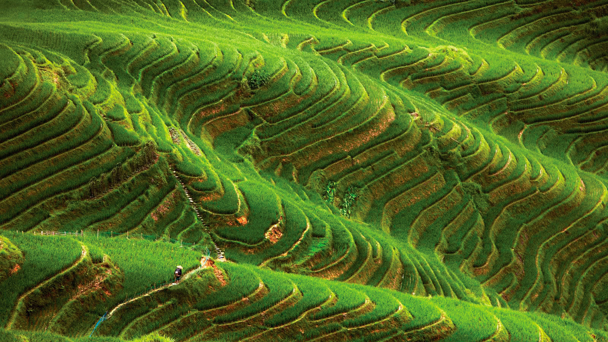 Concept Design Rice Field