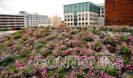 Green roof on the American Society of Landscape Architectss HQ in Washington, D.C.: colorful blooms of Silene caroliniana at the beginning of spring (Image: asla.org)