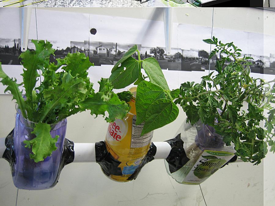hydroponics!