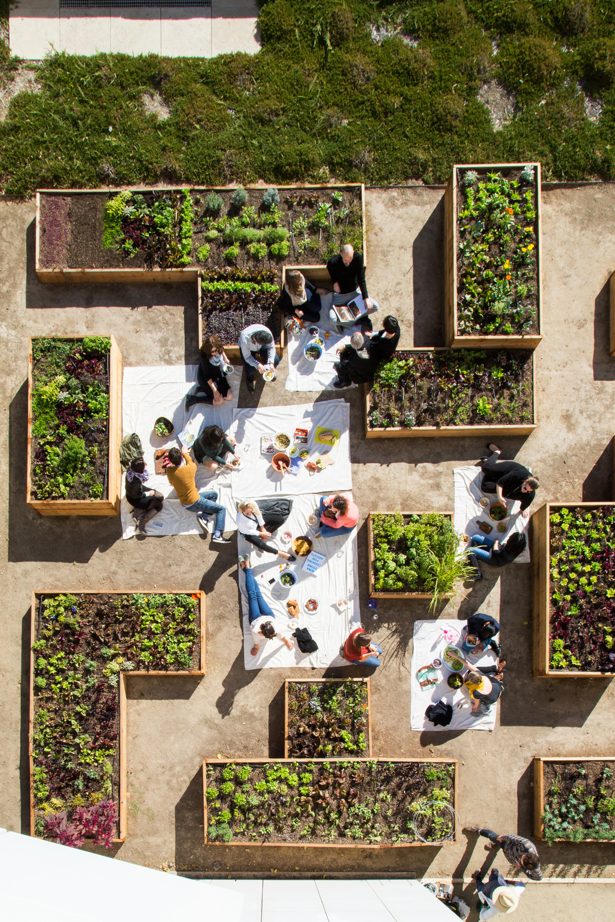 The Getty Salad Garden. Image courtesy of Terremoto Landscape.
