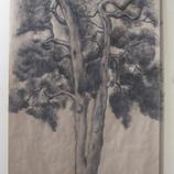 Shufan Zhang
