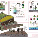 Subak ecology web, image via Julia Watson