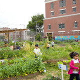 Edible Schoolyard, P.S. 216 by WORKac (Photo: Raymond Adams)