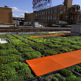 Green roof at Silvercup Studios. Image: Balmori.com