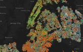 New York City's tree species mapped