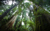 The Rainforest Solutions Project wins the 2016 Fuller Challenge Award