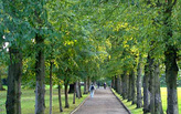 It's official: trees are good for your health