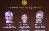 Nobel Prize in Medicine Is Awarded to Three Who Discovered Brain's 'Inner GPS'
