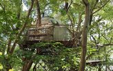 Japan's largest treehouse is also a high-tech engineering feat
