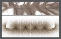 Generative morphologies