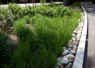 Asst Landscape Architect NYCDPR