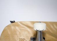 Lepidoptera Deck