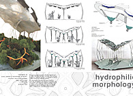 Hydrophilic Morphology