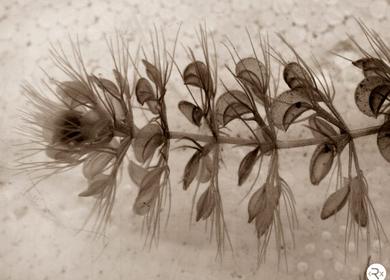 Biomimetic Genomes