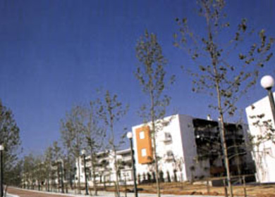 Main Green Zone – Olympic Village