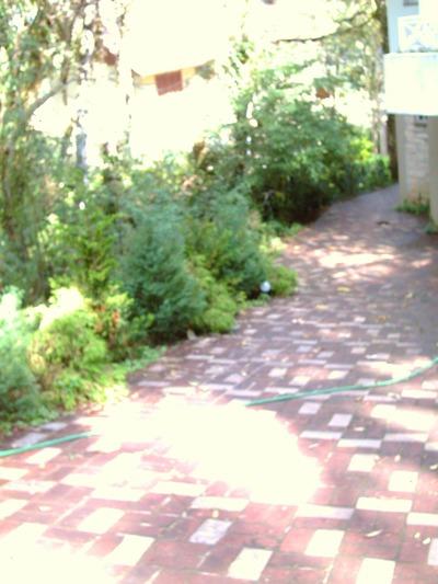 Schulte Family Garden