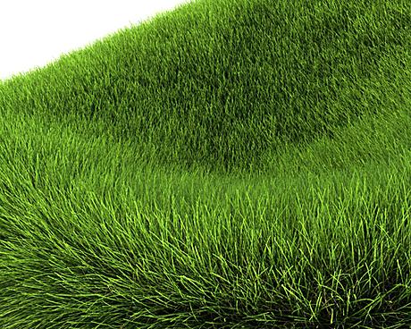more grass....
