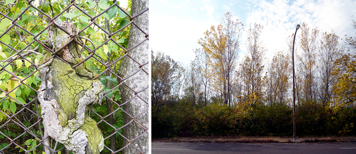 Vegetation on the Pruitt-Igoe site. Image courtesy of Jill Desimini.