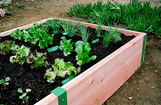 SR Raised Garden Kit; Photo courtesy of Scout Regalia