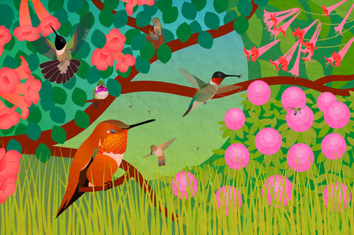 Life of Hummingbirds. (2011) One of seven bird illustrations for the educational phone app Build a Bird by Iridescent and the Cornell Lab of Ornithology. It has also been featured on TV in commercials + shows and several exhibits.