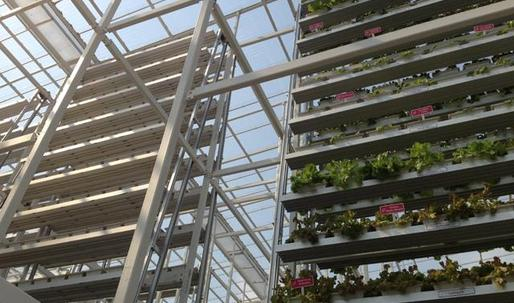 First commercial vertical farm opens in Singapore
