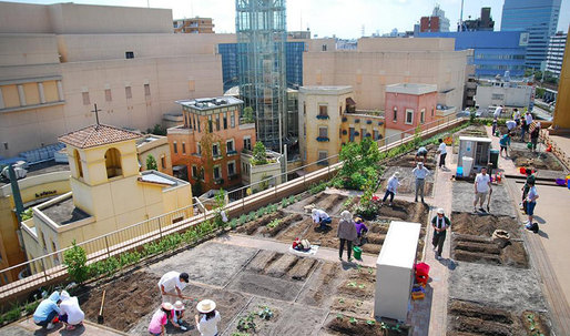 Japanese Commuters Grow Veggies On Train Station Rooftops