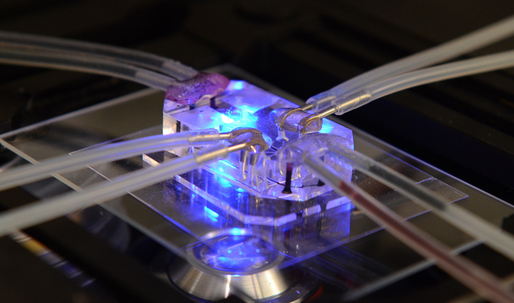 Human organ-mimicking microchip wins Designs of the Year Award 2015