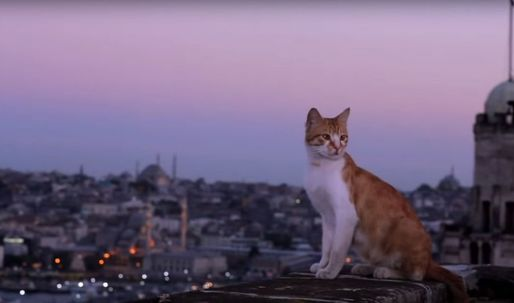 'Meowtropolis': In 'Kedi,' A City of Cats Reveals Secrets of Urban Development
