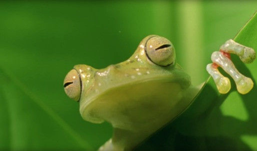 """Learning from our """"biological elders"""": take a look at this short documentary on """"Biomimicry"""""""