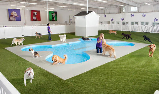 Fancy $48M animal terminal to open in JFK Airport next year