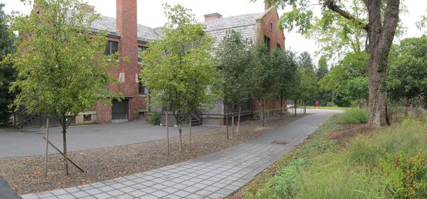Walkway & Tree Allee