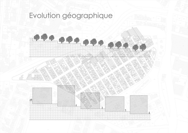 geographic evolution