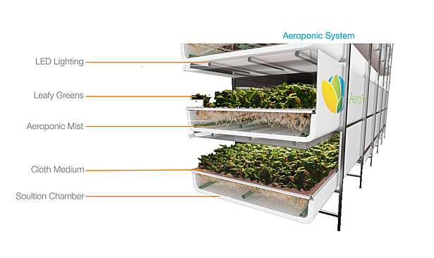 Aeroponic System Detail