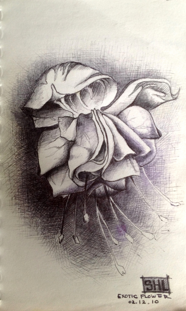 orchid, ball point pen