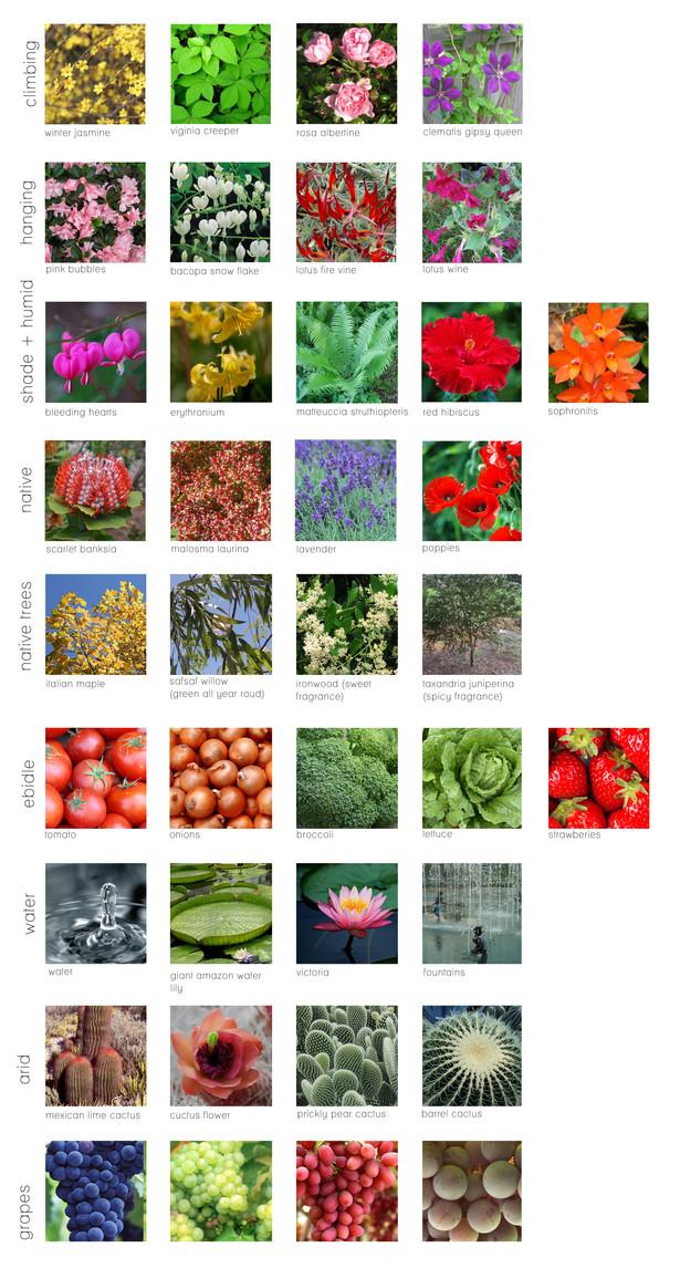 Plant types